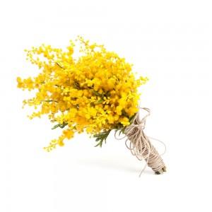 Mimoza El Çiçeği