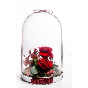 Solmayan Gül – Kırmızı